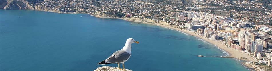 Villas to rent on the beach in Alicante